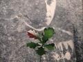 Rtm Pilecki (18)